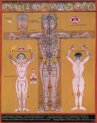 Medical diagram showing the chakra's